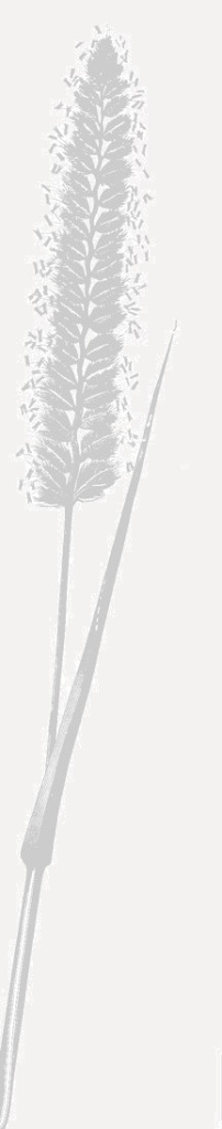 The Bernwood Ecology logo; a crested dog's-tail grass seedhead.